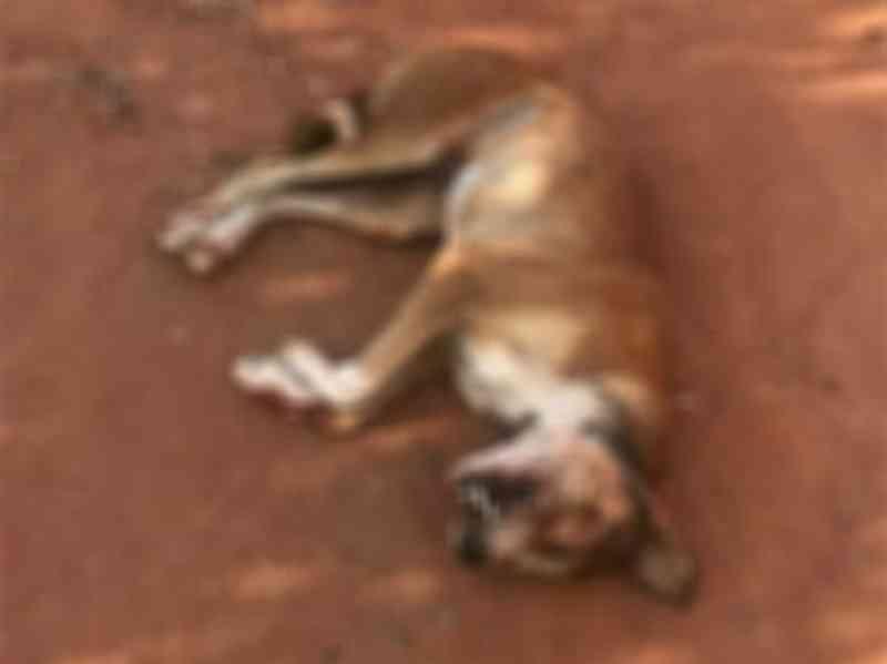 Homem é preso em flagrante após matar cachorro a pauladas em Barbalha, CE