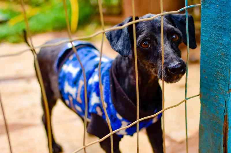 Cães acorrentados e sem comida: PCDF atuou em mil denúncias de maus-tratos a animais