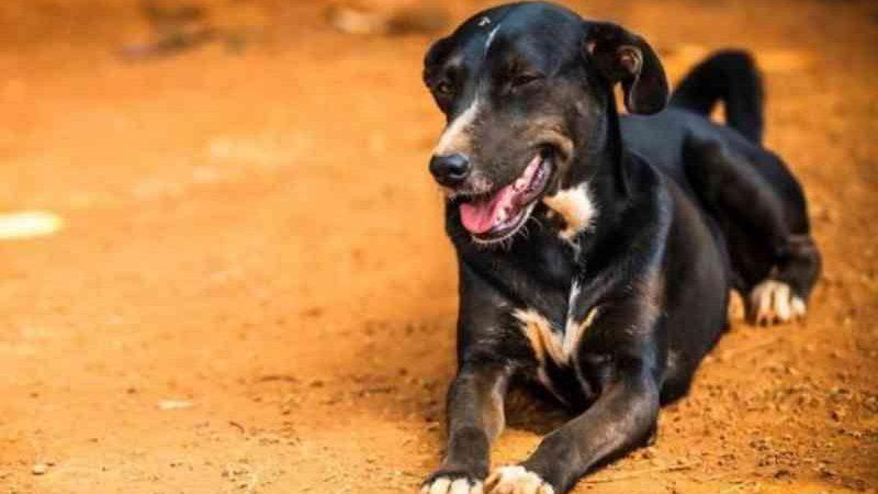 Ibram-DF anuncia 1,4 mil vagas para castração de cães e gatos. Saiba como