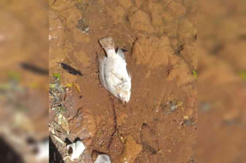 Brasília: após morte de tilápias, Parque da Cidade terá placas proibindo comida aos peixes