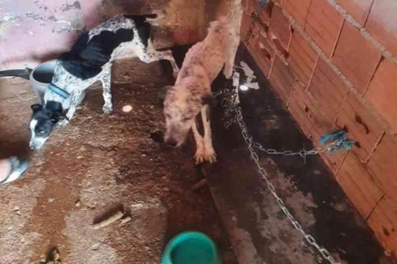 Vídeo: polícia do DF resgata animais que viviam amarrados em meio a fezes