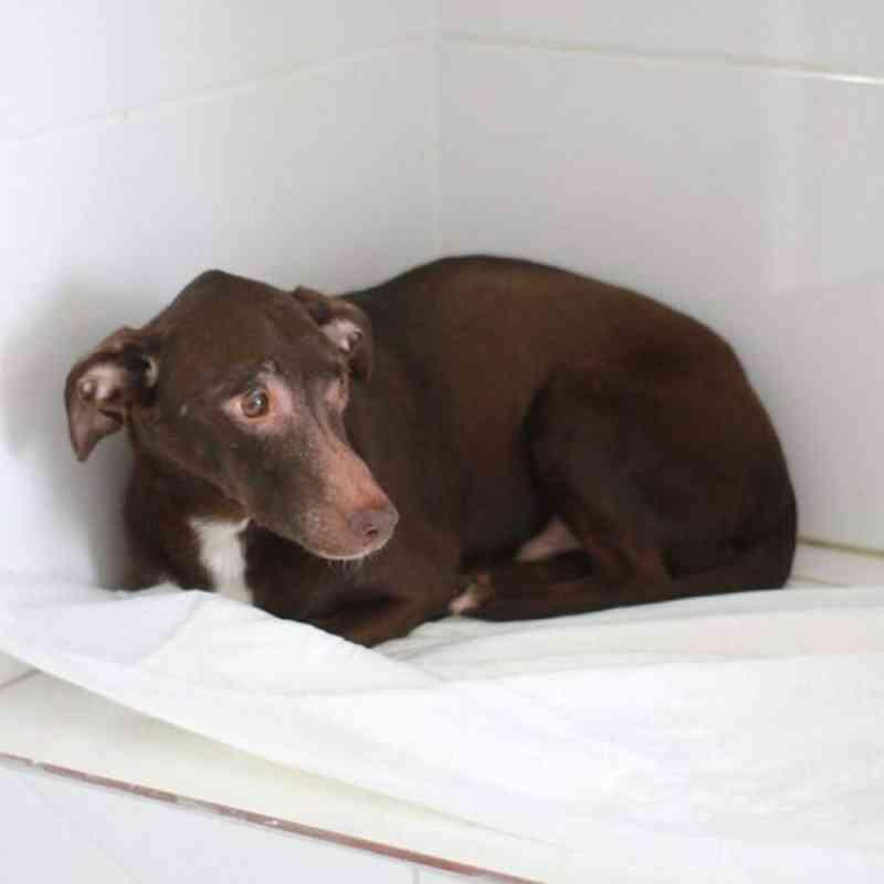 Animais resgatados em apartamento de Vila Velha (ES) estão em tratamento