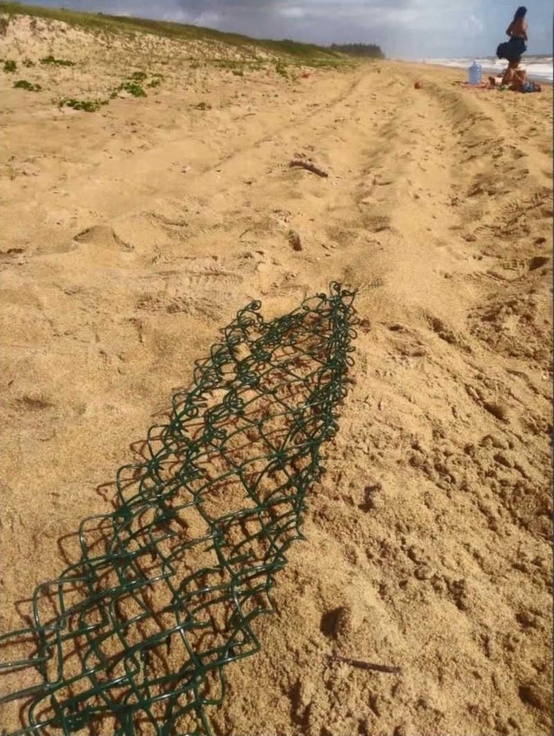Ninho com tartarugas mortas no ES estava com marcas de pneu por cima — Foto: Thiago Borges