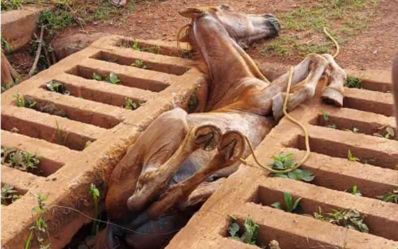 Bombeiros resgatam cavalo que caiu em mata-burro em fazenda de Anápolis, GO