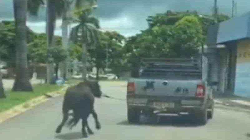 Cavalo é amarrado a picape e arrastado por rua de Itapuranga, GO; vídeo