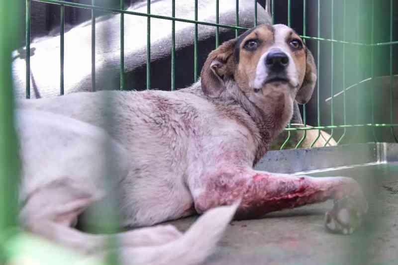 Empresário é preso por suspeita de maus-tratos a dois cachorros em Belo Horizonte, MG