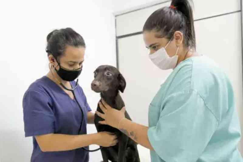 Mutirão da prefeitura vai castrar 5.000 cães e gatos em Betim, MG