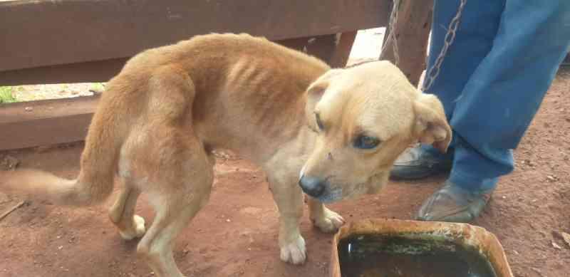 Tutor é preso por maus-tratos animal e cachorro é resgatado na zona rural de Ipiaçu, MG