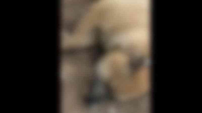 Cadela é encontrada morta com sinais de maus-tratos em Lagoa Santa, na Grande BH