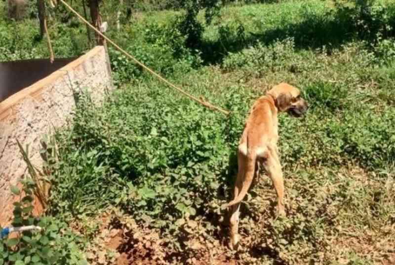 Homem é preso em flagrante após amarrar cachorro e abandoná-lo para morrer em MG