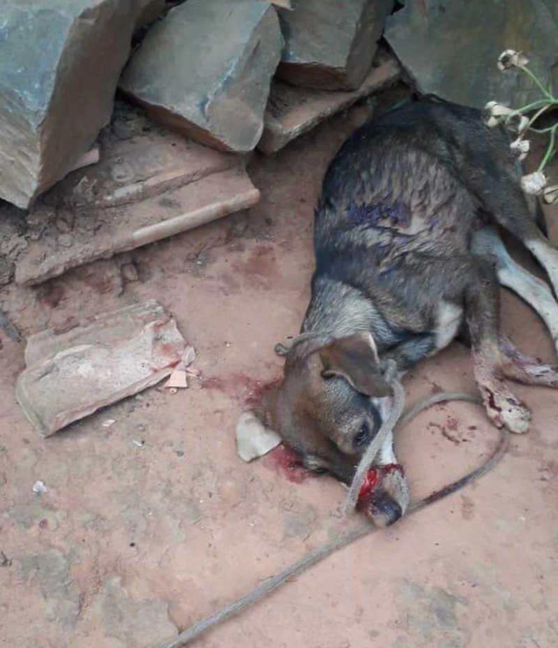 Homem é preso por golpear cachorro com facão na zona rural de Montes Claros, MG