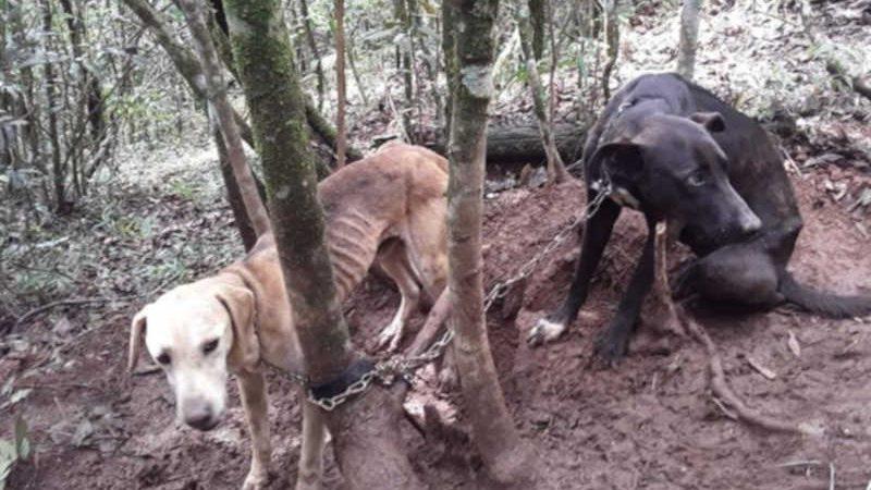 Eles estavam sem comida e sem água. Foto: Divulgação CBMG