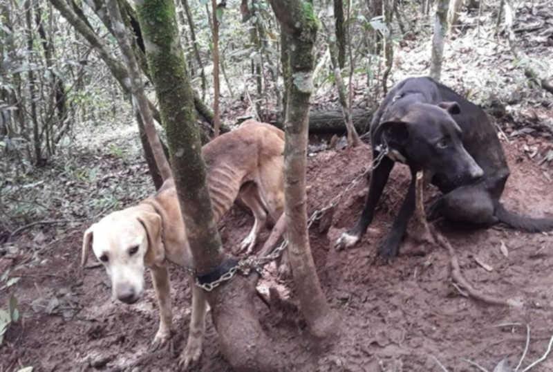 Cachorros são acorrentados em árvore e abandonados em Poços de Caldas, MG