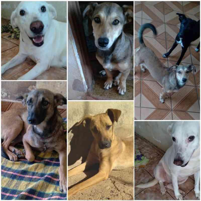 Em tratamento contra o câncer, protetora busca tutores para cães resgatados por ela: 'Para adotar é preciso, acima de tudo, amar aos animais'