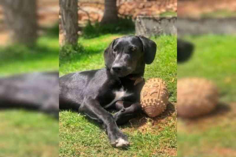 MP é acionado para que investigue morte de cadela em ação da Polícia Civil do DF