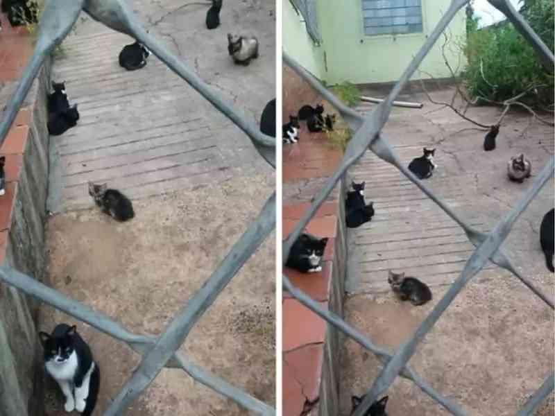 Gatos estão abandonados há 6 anos em casa de tutora que faleceu, em Campo Grande, MS
