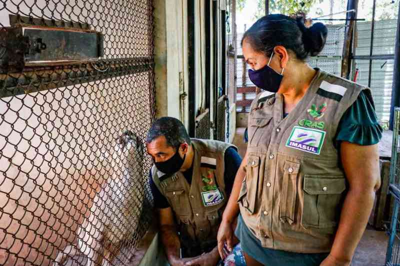 Casal que vive em reserva em MS testemunha salvamento de animais no 'ano do fogo'