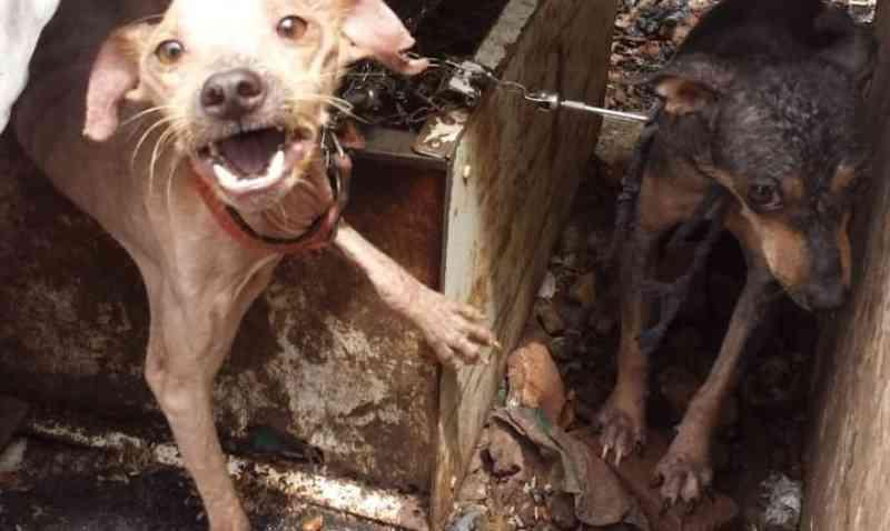 Vídeo: desnutridos, cinco cães são encontrados em situação de maus-tratos na Vila Ferroviária, em Campo Grande, MS