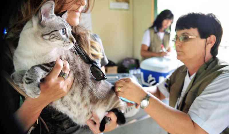 Campo Grande (MS) vai ganhar Hospital Veterinário e Centro de Triagem de Animais