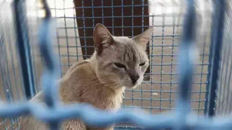 Vagas para castrar gatos acabam em minutos e rapidez gera protestos em Campo Grande, MS