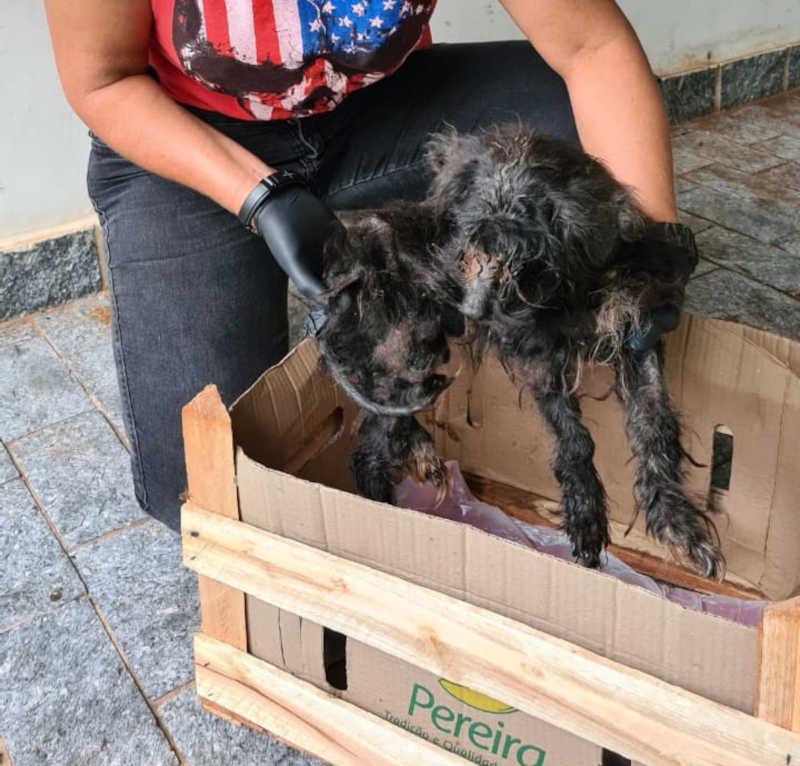 Momento do resgate da cachorrinha vítima de maus-tratos (Foto: Decat)
