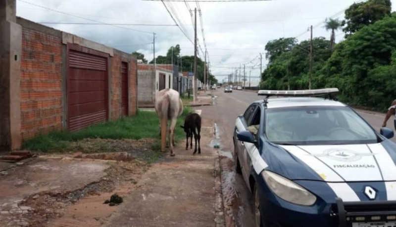 Prefeitura de Corumbá (MS) vai multar tutores de animais abandonados a partir de segunda-feira