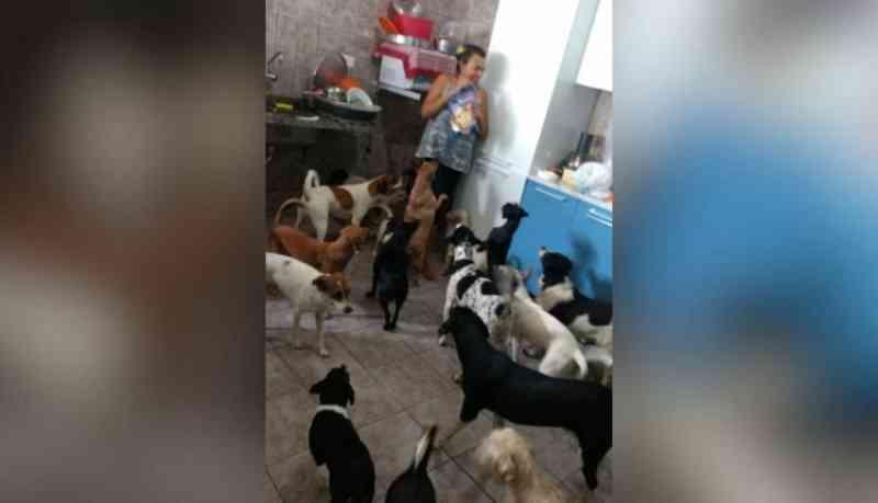 Com foto de cães pedindo comida, cuidadora é surpreendida ao receber 300 kg de ração em Campo Grande, MS