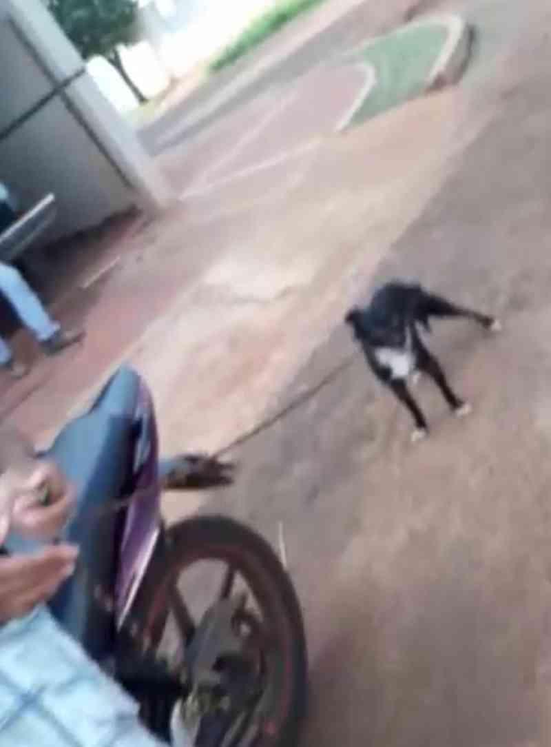 Protetora de animais flagra homem arrastando cachorro com corda amarrada em moto em MS; VÍDEO