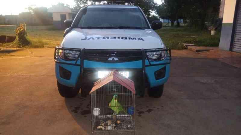 Rapaz é autuado e leva multa de R$ 5 mil ao deixar papagaio em gaiola na varanda da casa dele em MS, diz PMA