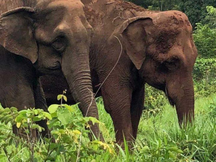 ONGs declaram à Justiça apoio à permanência da elefanta Bambi em santuário