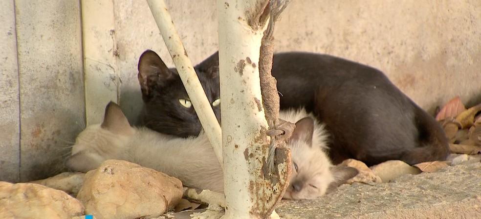 Investigação do MP apura envenenamento de gatos perto de condomínio de luxo em Cuiabá, MT
