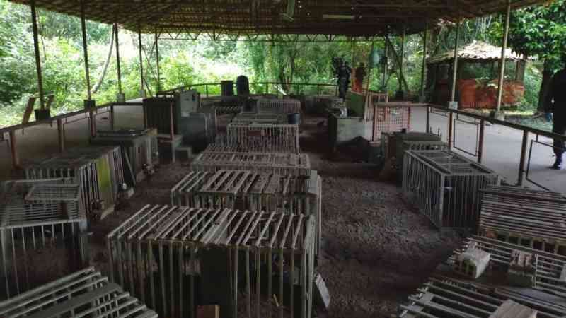 Mais de 50 galos usados em rinhas são apreendidos com sinais de maus-tratos em Ananindeua, PA
