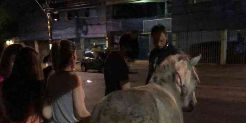Indiciado por morte de cavalo em Belém (PA) é liberado por falha na Lei de Maus-tratos