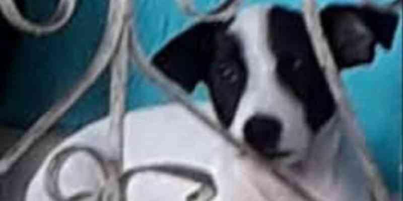 Pedida prisão preventiva de militar que matou cachorro em Belém, PA