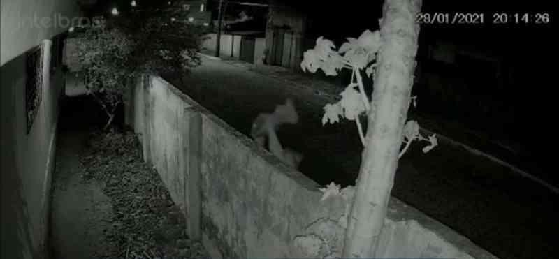 Gato é jogado por mulher em quintal de casa e morre após ser atacado por cachorro, na PB; VÍDEO