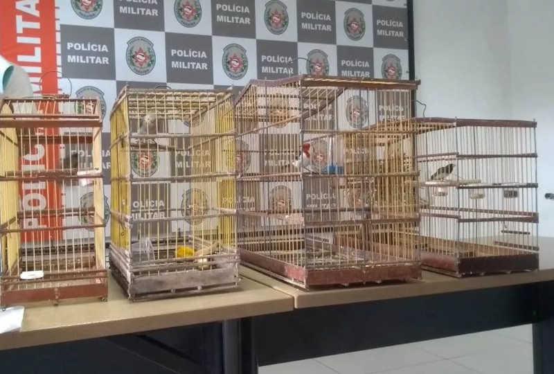 Homem engole pássaro para tentar não ser preso por maus-tratos a animais na PB, diz PM