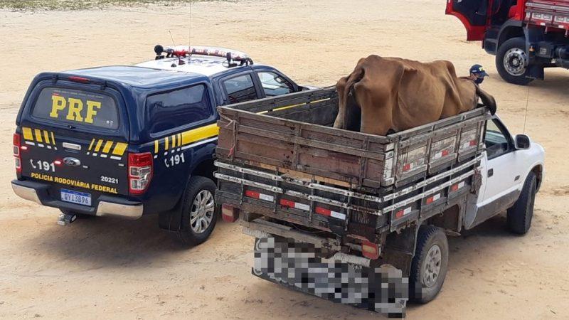 Homem é autuado pela PRF por maus-tratos de animais em Garanhuns, PE