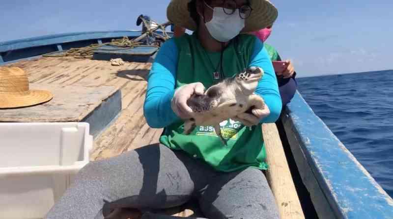 Depois de quatro meses em tratamento, tartaruga-oliva é devolvida ao mar em Porto de Galinhas, PE