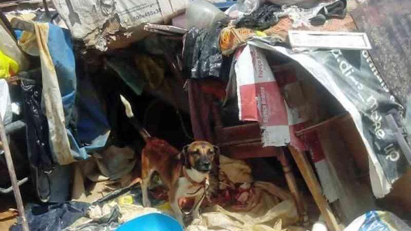 Idosa é presa em flagrante por maltratar três cães em casa cheia de lixo e entulhos no Recife, PE