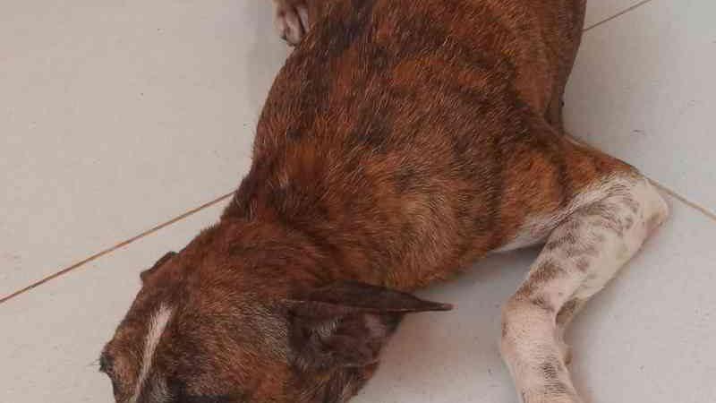 Cadelas são resgatadas por policiais após denúncia de maus-tratos em Parnaíba, PI