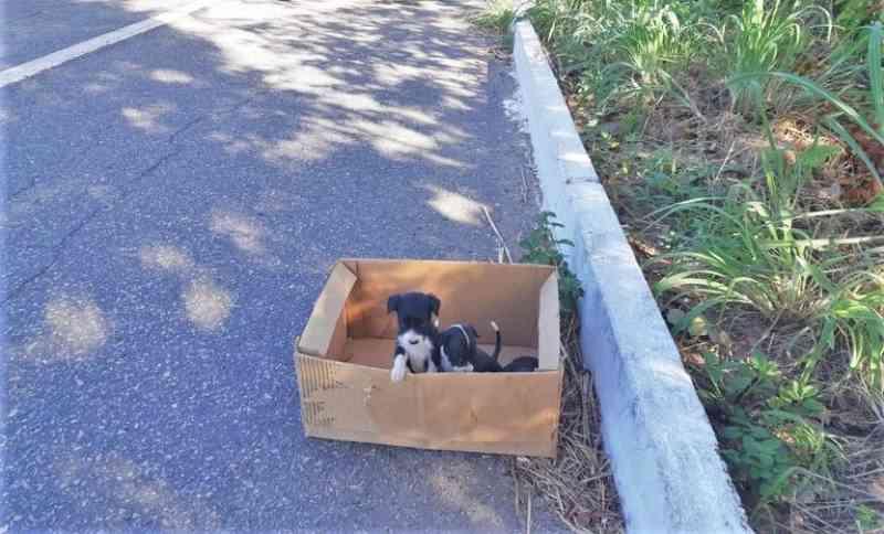 PRF resgata cães abandonados em caixa na BR-343 em Piripiri, PI