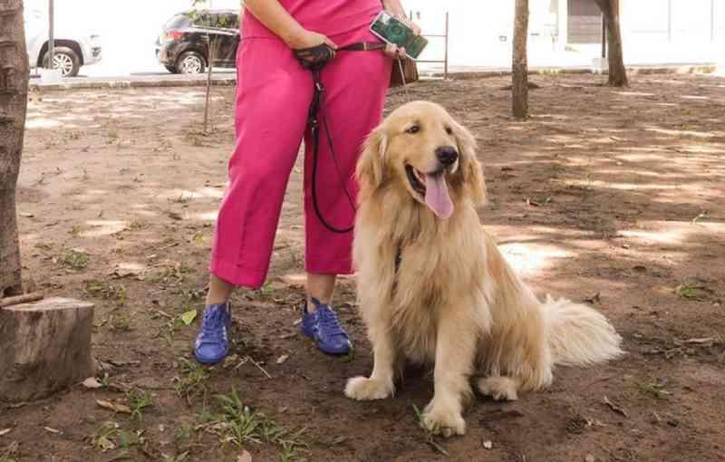 Teresina (PI) tem primeiro 'cachorródromo' com espaço de lazer e água para animais