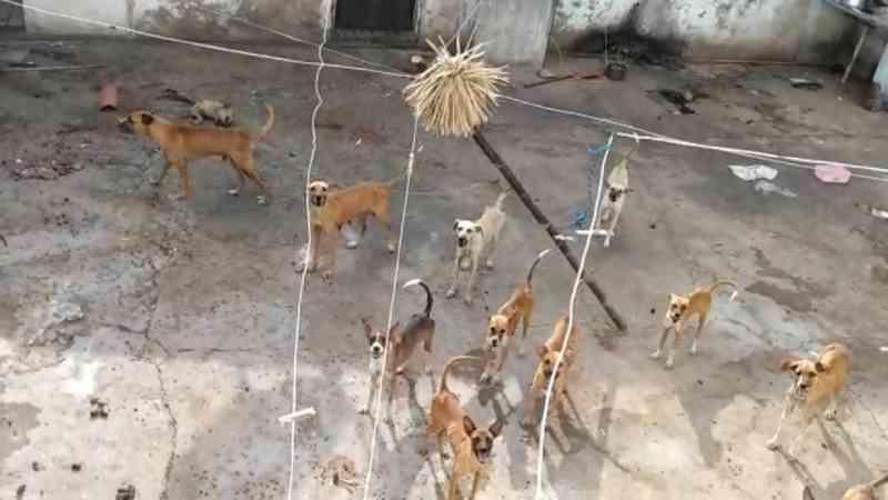 Médica adota 11 cães que foram abandonados sem água e comida em Teresina, PI