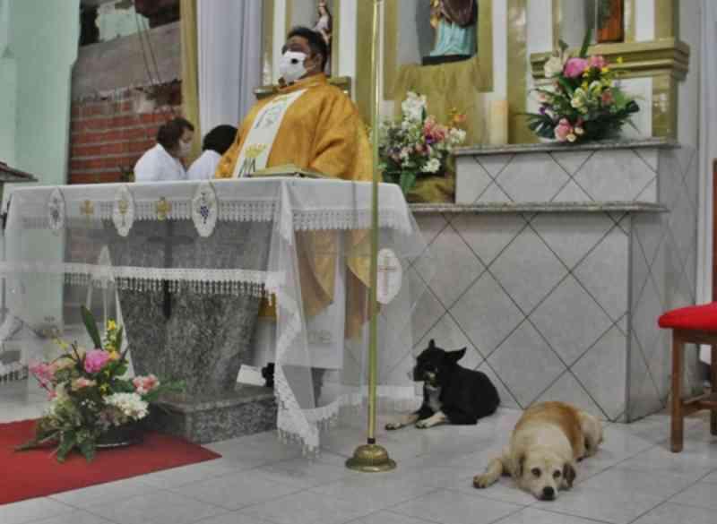 Cadelas frequentam missas e ganham simpatia do padre no Piauí