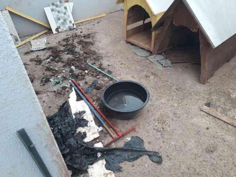 Sete cachorros em situação de maus-tratos são resgatados em Apucarana, PR