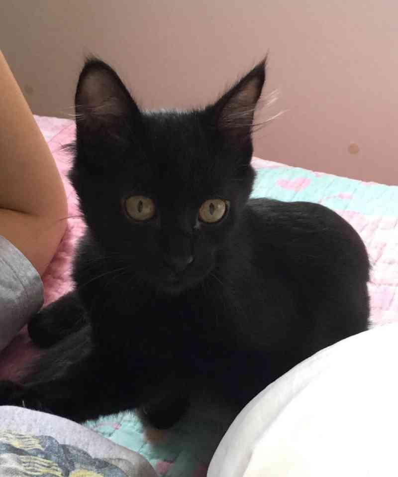 Câmera flagra filhote de gata 'caindo' de carro em movimento em Cascavel (PR); animal está para doação