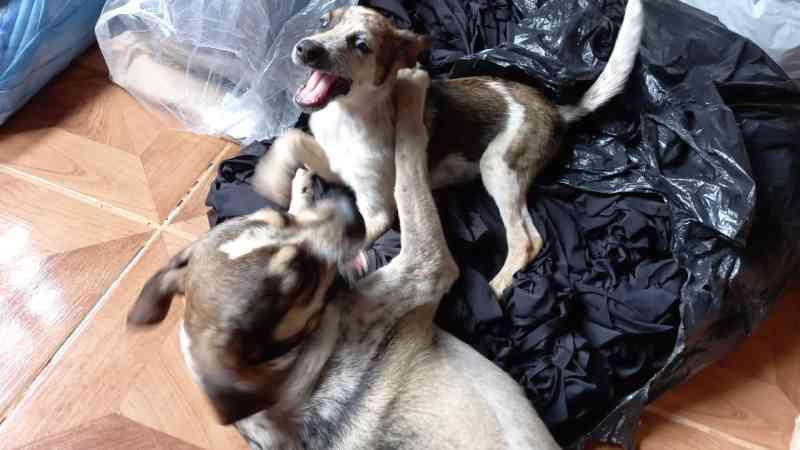 Com dívida de R$ 20 mil, 'Latidos do Bem' suspende resgate de animais de rua em Cascavel, PR