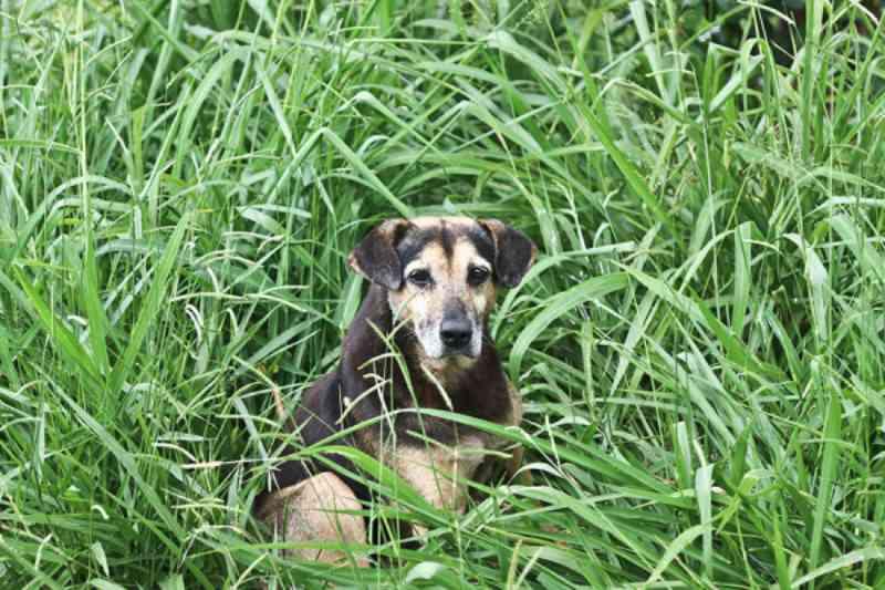 Casos de abandono de animais se multiplicam em Curitiba (PR) e entidades pedem adoção responsável