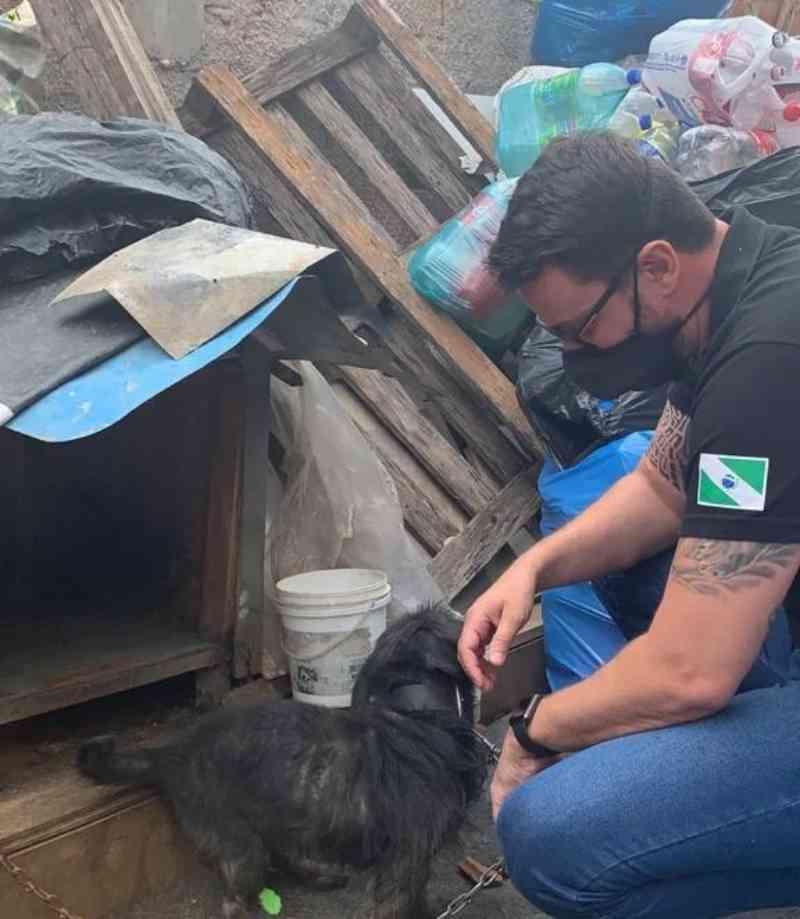 """Polícia recebe denúncia sobre maus-tratos contra cães e catadora se desespera: """"Eles são minha vida"""""""