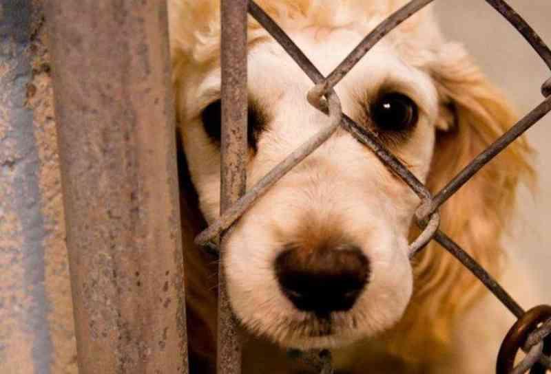 Maus-tratos a animais geram multa de até R$ 100 milhões em Londrina, PR